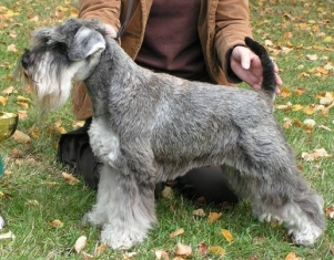 Web Pages Czech Lady Kennel